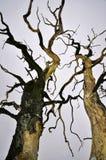 干燥树自然灾害 免版税库存图片