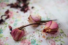 干燥桃红色玫瑰在桌上 库存图片