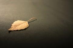 干燥桦树叶子 免版税库存照片