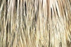 干燥棕榈叶特写镜头,纹理,背景 免版税图库摄影