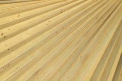 干燥棕榈叶纹理 免版税库存照片