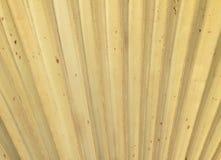 干燥棕榈叶纹理 免版税库存图片