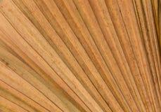干燥棕榈叶线和纹理 库存图片