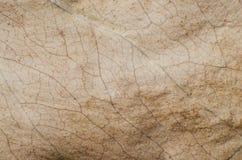 干燥棕色叶子的样式 免版税图库摄影