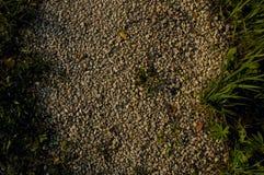 干燥棕色大森林小卵石石头岩石背景构造了特写镜头 库存图片
