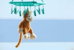 干燥棕色猴子垂悬与室外的钳位 免版税库存图片