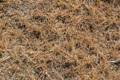 干燥棕黄色草背景 免版税库存图片