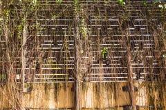 干燥植物,秋天背景 免版税库存图片