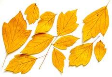 干燥槭树叶子上油凹道绘画,照片操作 库存图片