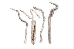 干燥橄榄树枝 库存照片