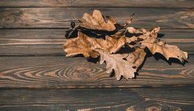 干燥橡木叶子 秋天背景特写镜头上色常春藤叶子橙红 免版税库存照片