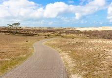 干燥欧石南丛生的荒野和沙丘在北荷兰省 带领通过风景的自行车方式 免版税库存图片