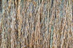 干燥水稻种子 免版税库存图片