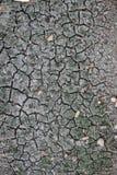 干燥池塘 库存图片