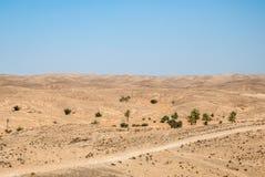 干燥沙漠的看法有小山、棕榈树和恶劣的植被的 图库摄影