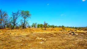 干燥河在11月,旱季的结尾,在克留格尔国家公园 库存图片