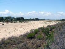 干燥河床。在澳大利亚北部。 免版税库存照片