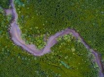 干燥河床顶视图在绿色美洲红树森林里 库存图片