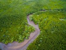 干燥河床鸟瞰图在绿色美洲红树森林里 库存照片