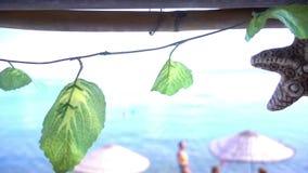 干燥海星和叶子临近海滩 影视素材