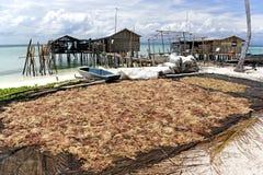干燥海草 免版税库存图片