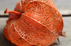 干燥灯笼果或空泡宏观射击  秋天花离开纹理 季节性背景 免版税库存图片