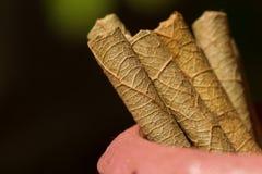 干燥烟草叶子纹理  传统印地安香烟 宏观照片 免版税库存图片