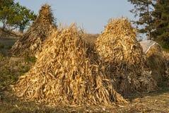 干燥玉米栈 库存图片