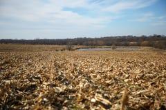 干燥玉米田平静的场面在收获以后的 免版税图库摄影