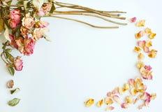 干燥玫瑰秋天背景的图片与拷贝空间的在w 免版税图库摄影