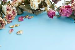 干燥玫瑰秋天背景的图片与拷贝空间的 免版税库存照片