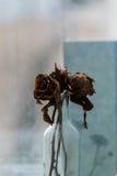 干燥玫瑰 库存图片