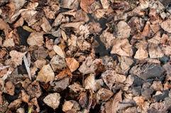 干燥白杨树纹理在地面上生叶 顶视图 库存图片