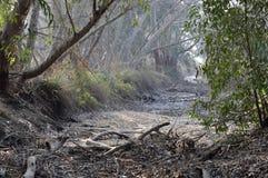 干燥的小河 库存图片