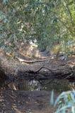 干燥的小河 免版税图库摄影