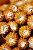干燥的玉米 库存照片