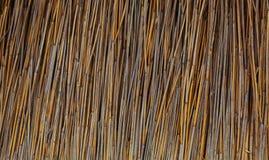 干燥的藤茎 库存图片