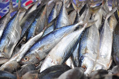 干燥的鲭鱼 免版税库存照片