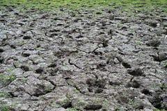 干燥破裂的土壤顶视图与草的 免版税库存图片