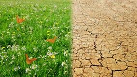 干燥破裂的地球和草甸有绿草的 免版税库存图片