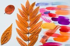 干燥秋叶创造在绘与不同颜色油漆的一张白色纸片的抽象 图库摄影