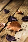 干燥秋叶变褐在被风化的板条木背景,土气葡萄酒样式的紫色 免版税库存图片