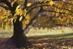 干燥秋叶和树 免版税库存图片