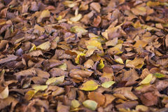 干燥秋叶在公园 库存照片