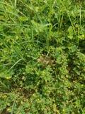 干燥秋天叶子在绿色夏天草甸 免版税库存图片