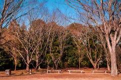 干燥秋天树和肌力草在公园,成田,日本 库存图片