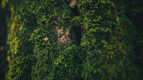 干燥种子照片在青苔的盖了树干 免版税图库摄影