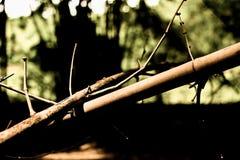 干燥竹子在庭院里 库存图片