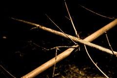 干燥竹子在庭院里 库存照片