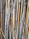 干燥纸莎草墙壁 库存照片